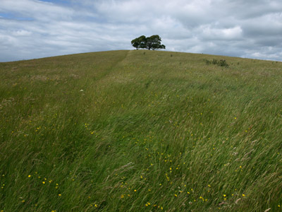 Waving ocean of grass on Ecton Hill